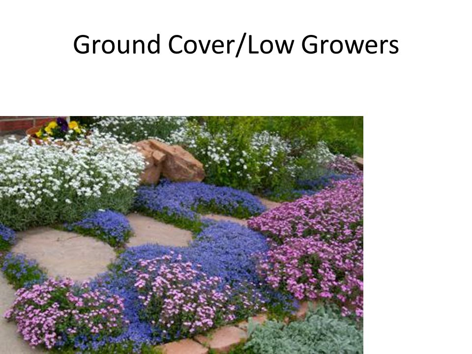 Ground Cover/Low Growers