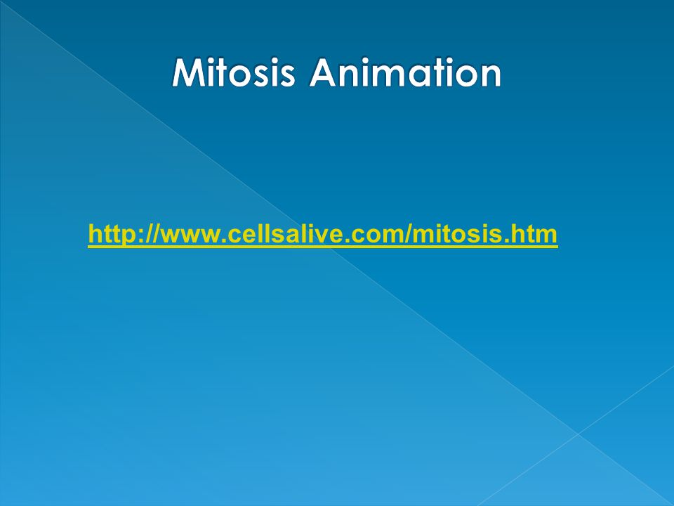 Mitosis Animation http://www.cellsalive.com/mitosis.htm