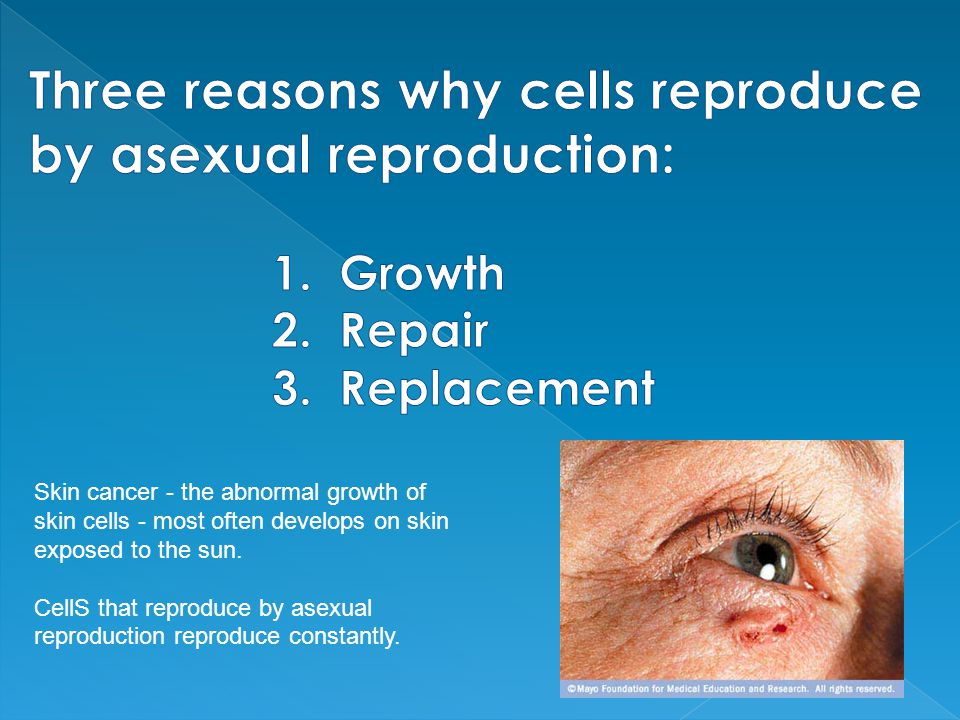 Three reasons why cells reproduce by asexual reproduction: 1. Growth 2