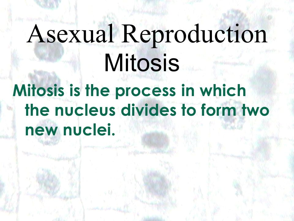Asexual Reproduction Mitosis