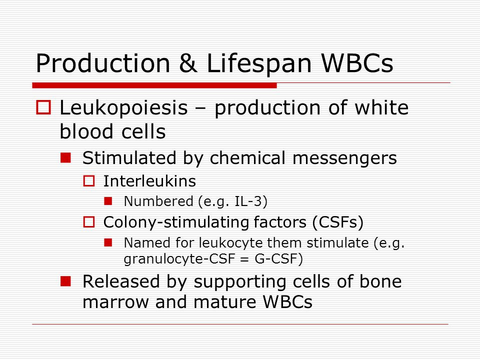 Production & Lifespan WBCs