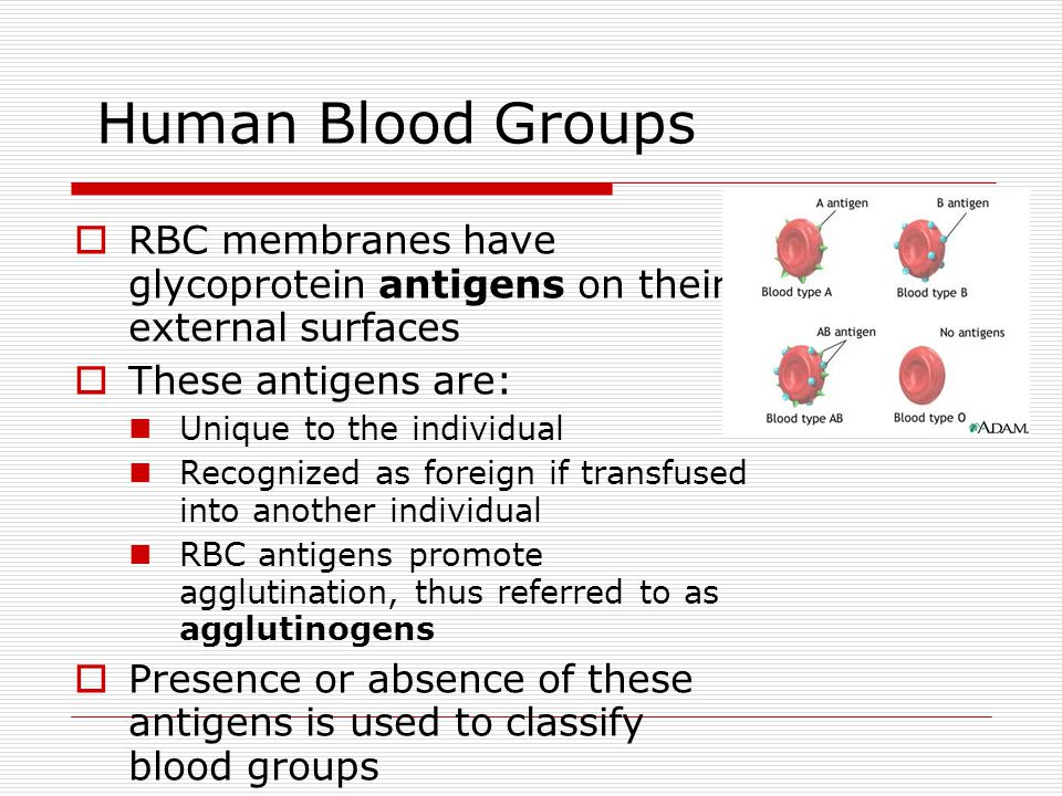 Human Blood Groups RBC membranes have glycoprotein antigens on their external surfaces. These antigens are: