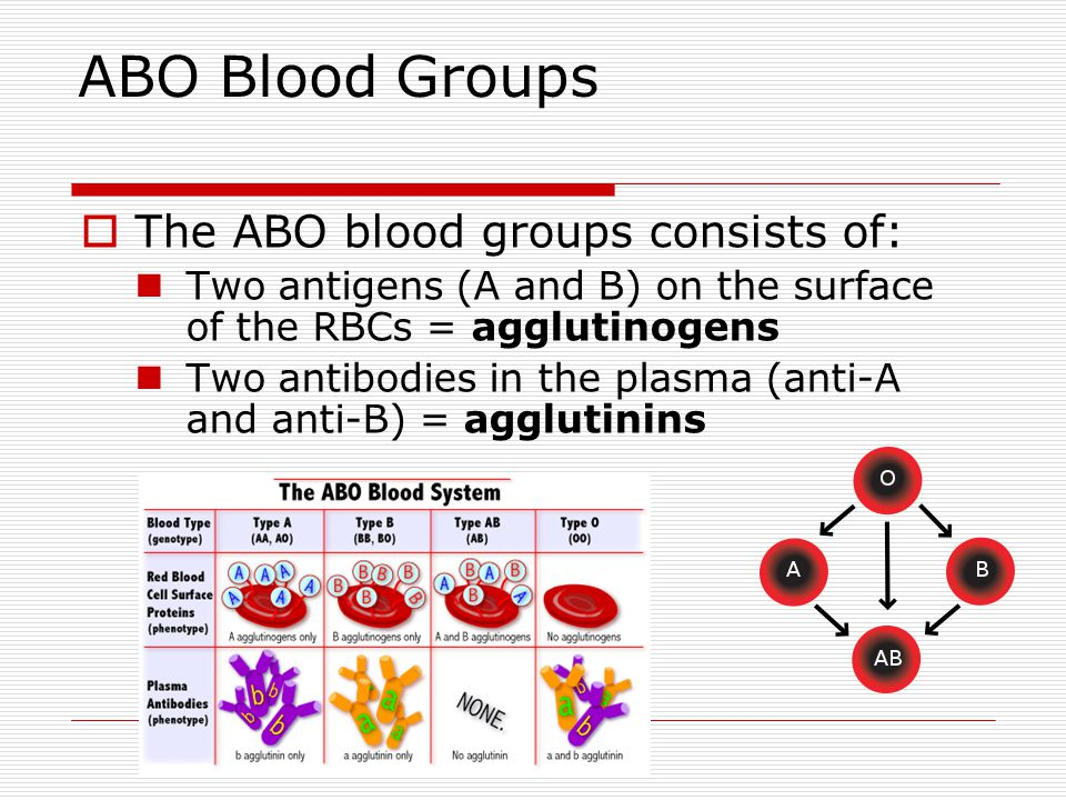 ABO Blood Groups The ABO blood groups consists of: