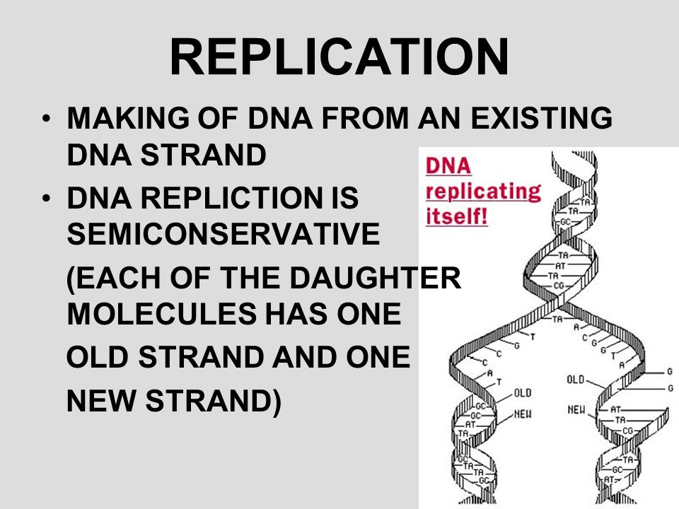 REPLICATION MAKING OF DNA FROM AN EXISTING DNA STRAND