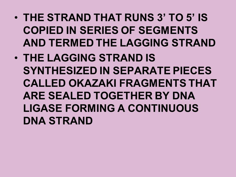 THE STRAND THAT RUNS 3' TO 5' IS COPIED IN SERIES OF SEGMENTS AND TERMED THE LAGGING STRAND