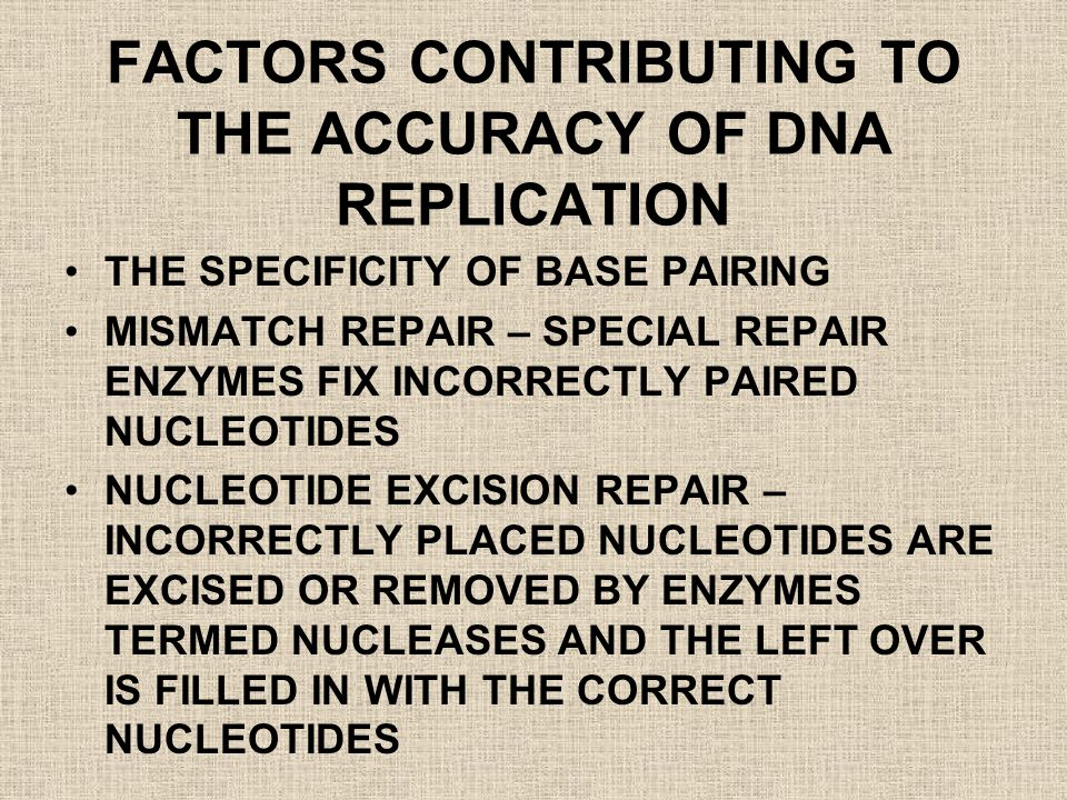 FACTORS CONTRIBUTING TO THE ACCURACY OF DNA REPLICATION