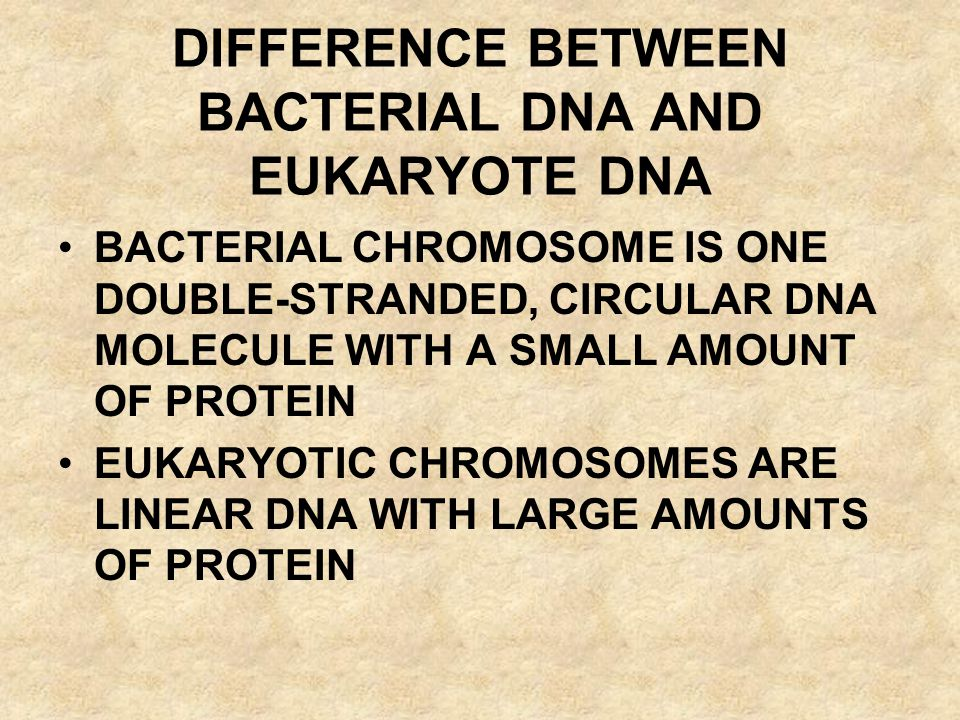 DIFFERENCE BETWEEN BACTERIAL DNA AND EUKARYOTE DNA