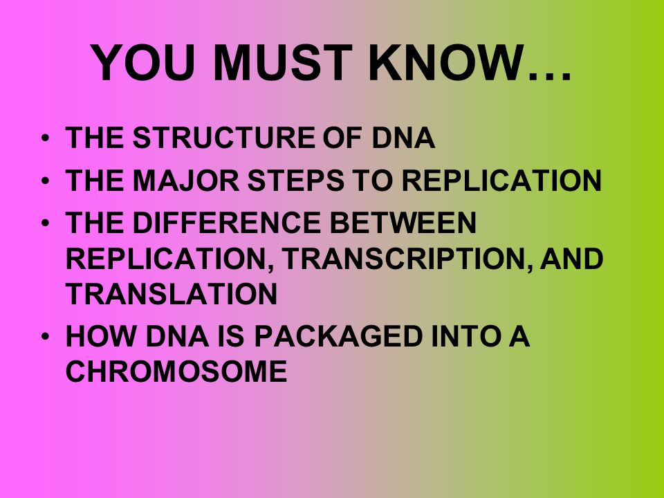 YOU MUST KNOW… THE STRUCTURE OF DNA THE MAJOR STEPS TO REPLICATION