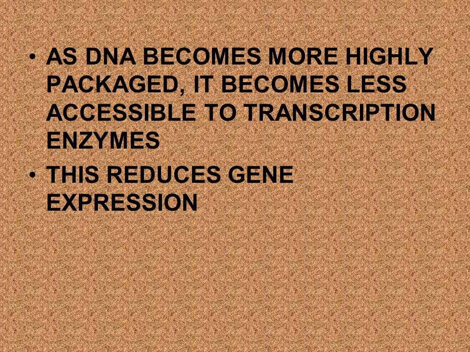 AS DNA BECOMES MORE HIGHLY PACKAGED, IT BECOMES LESS ACCESSIBLE TO TRANSCRIPTION ENZYMES
