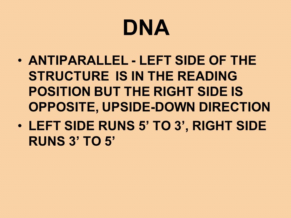 DNA ANTIPARALLEL - LEFT SIDE OF THE STRUCTURE IS IN THE READING POSITION BUT THE RIGHT SIDE IS OPPOSITE, UPSIDE-DOWN DIRECTION.
