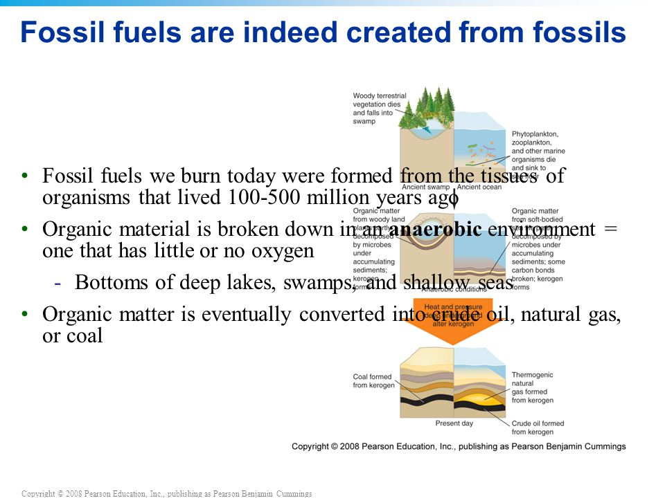 Fossil fuels are indeed created from fossils