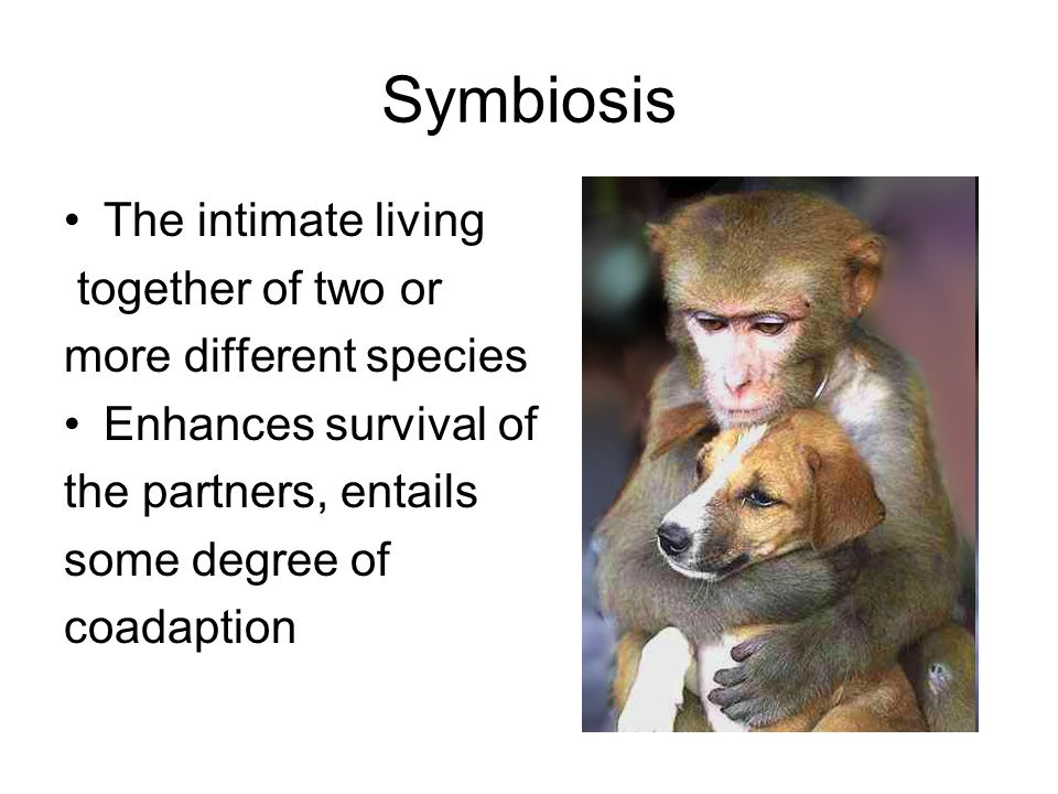 Symbiosis The intimate living together of two or