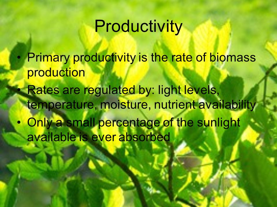 Productivity Primary productivity is the rate of biomass production