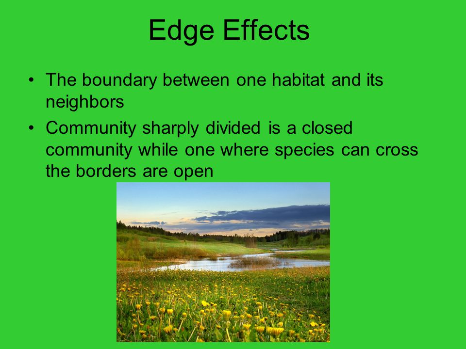 Edge Effects The boundary between one habitat and its neighbors