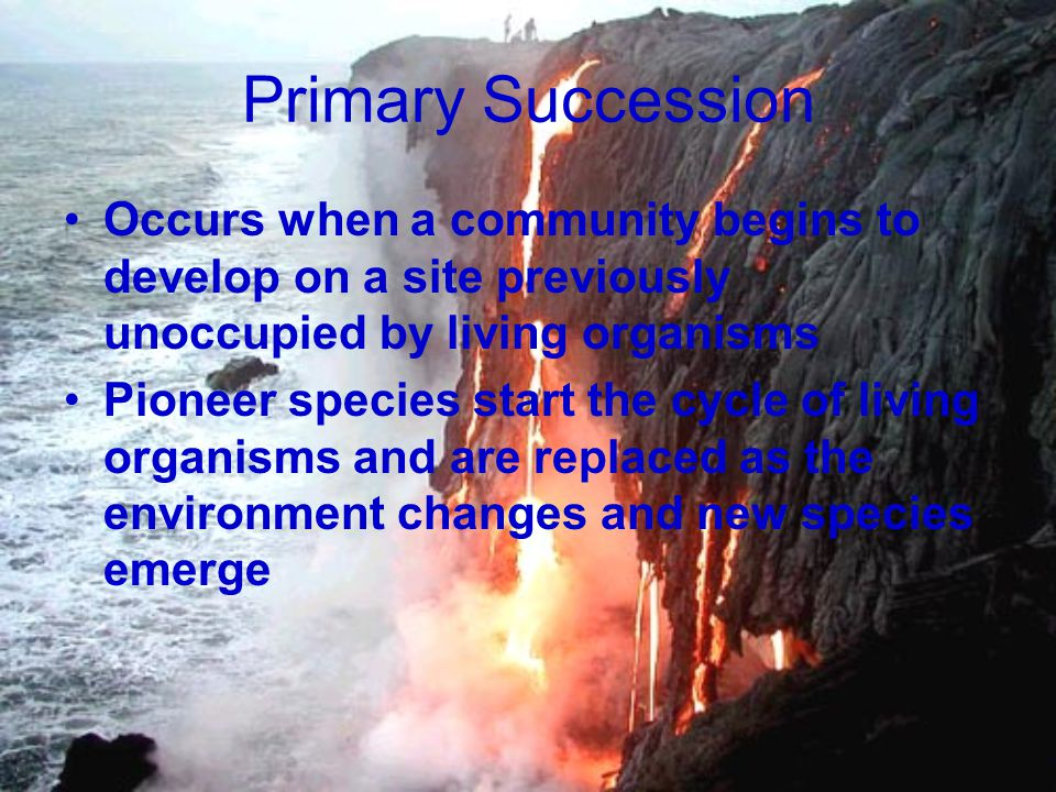 Primary Succession Occurs when a community begins to develop on a site previously unoccupied by living organisms.