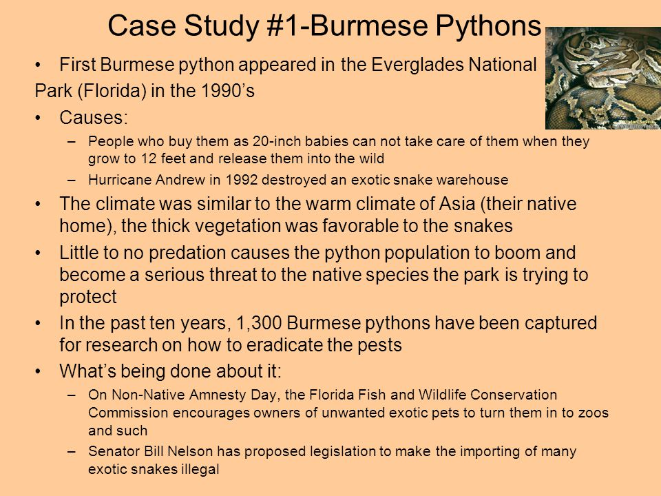 Case Study #1-Burmese Pythons