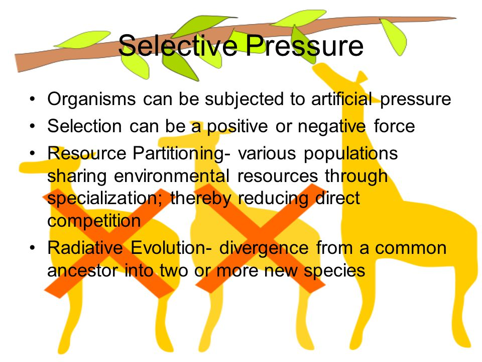 Selective Pressure Organisms can be subjected to artificial pressure