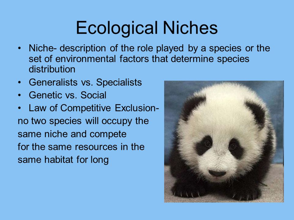 Ecological Niches Niche- description of the role played by a species or the set of environmental factors that determine species distribution.
