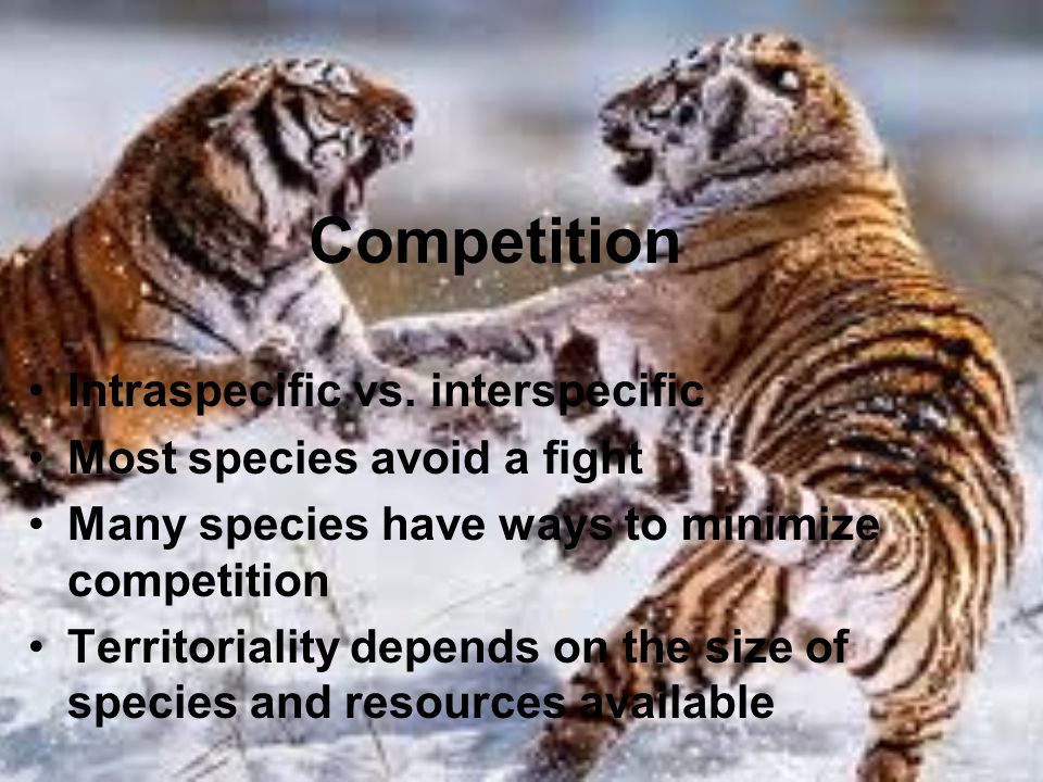Competition Intraspecific vs. interspecific Most species avoid a fight