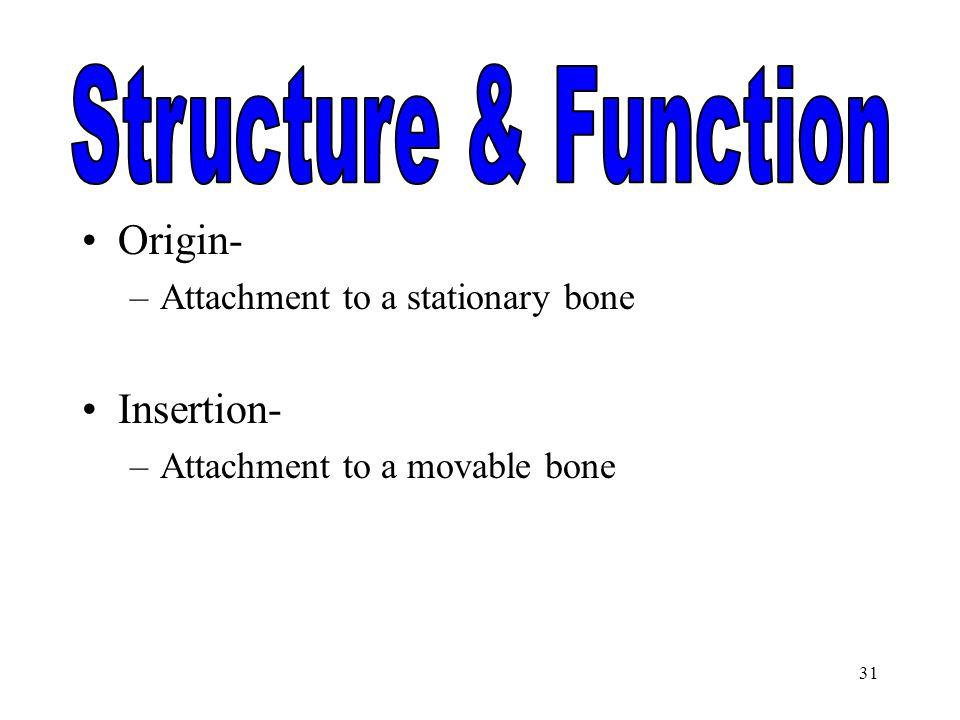 Structure & Function Origin- Insertion-
