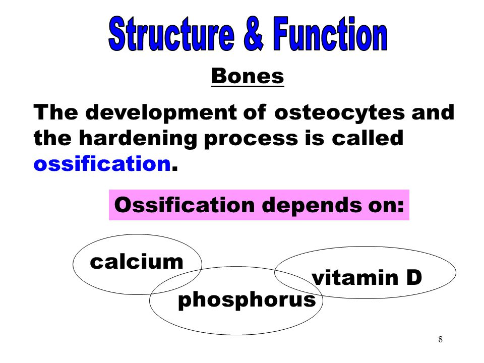 Ossification Structure & Function Bones
