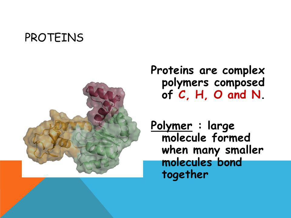 Proteins Proteins are complex polymers composed of C, H, O and N.