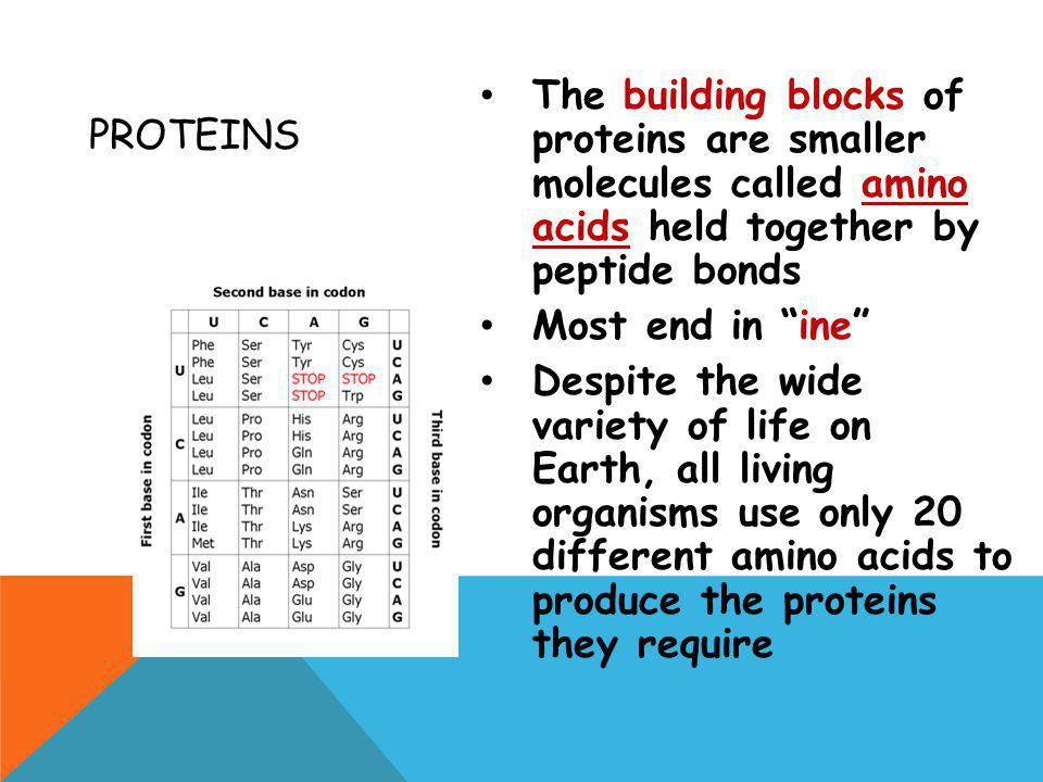 Proteins The building blocks of proteins are smaller molecules called amino acids held together by peptide bonds.