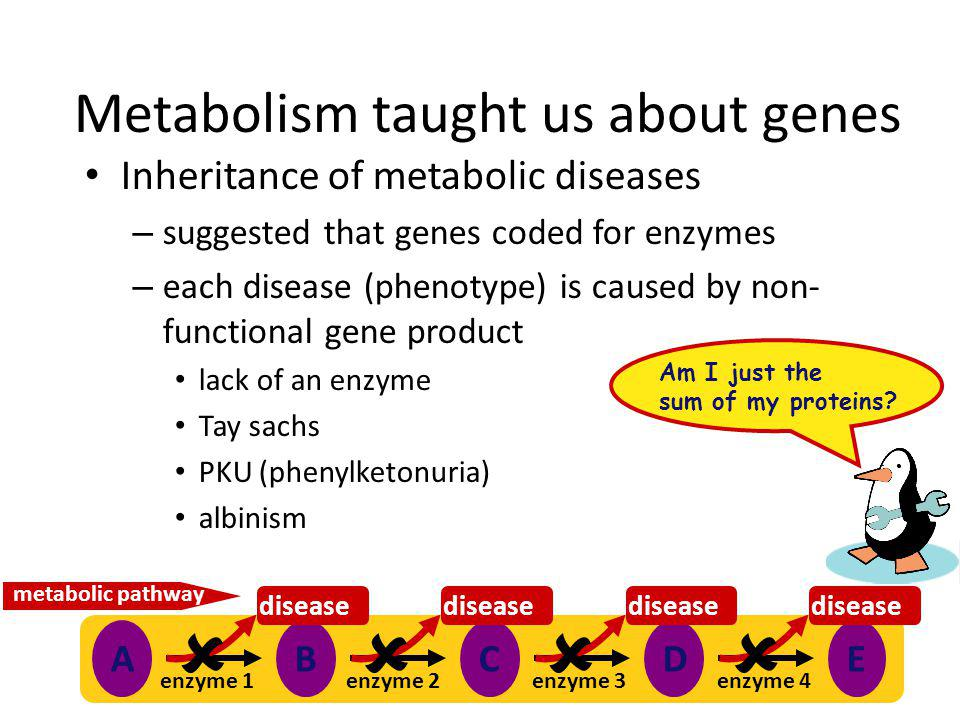 Metabolism taught us about genes