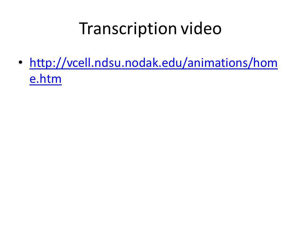 Transcription video http://vcell.ndsu.nodak.edu/animations/home.htm