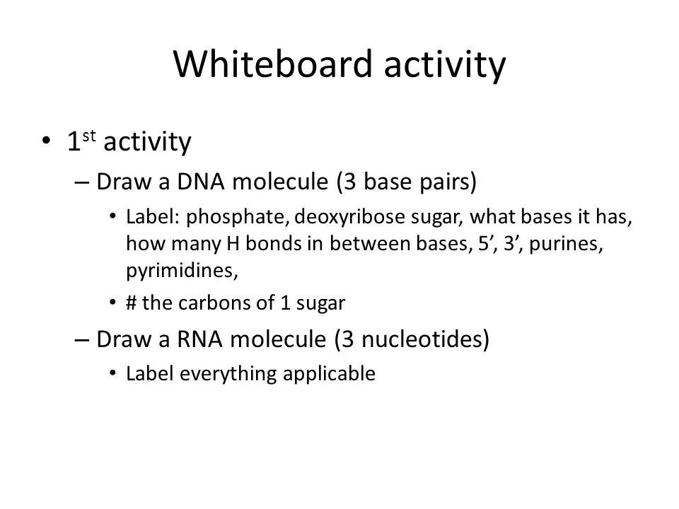 Whiteboard activity 1st activity Draw a DNA molecule (3 base pairs)
