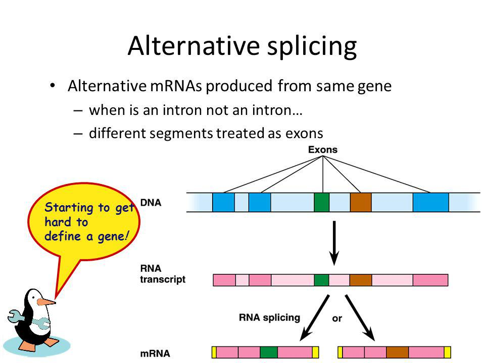 Alternative splicing Alternative mRNAs produced from same gene