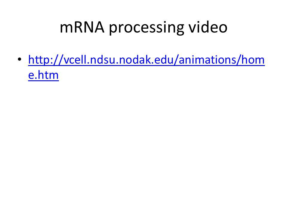 mRNA processing video http://vcell.ndsu.nodak.edu/animations/home.htm