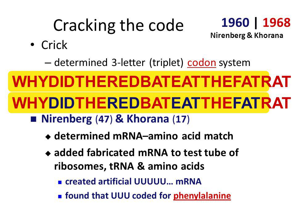 Cracking the code WHYDIDTHEREDBATEATTHEFATRAT