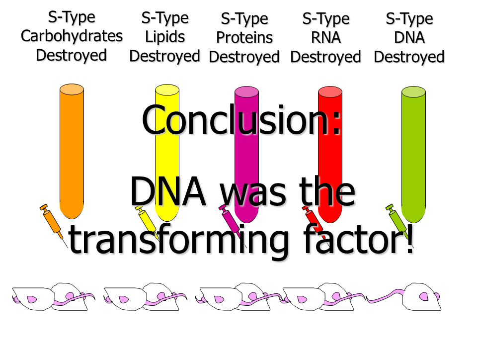 DNA was the transforming factor!