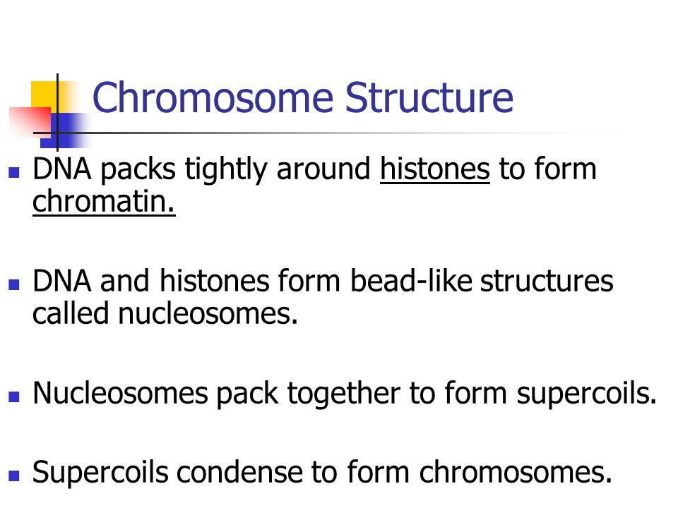 Chromosome Structure DNA packs tightly around histones to form chromatin. DNA and histones form bead-like structures called nucleosomes.