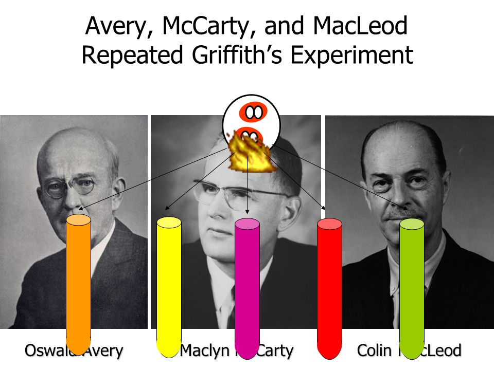 Avery, McCarty, and MacLeod Repeated Griffith's Experiment