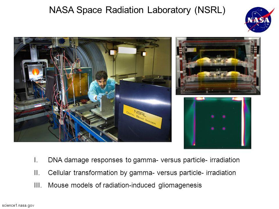 NASA Space Radiation Laboratory (NSRL)
