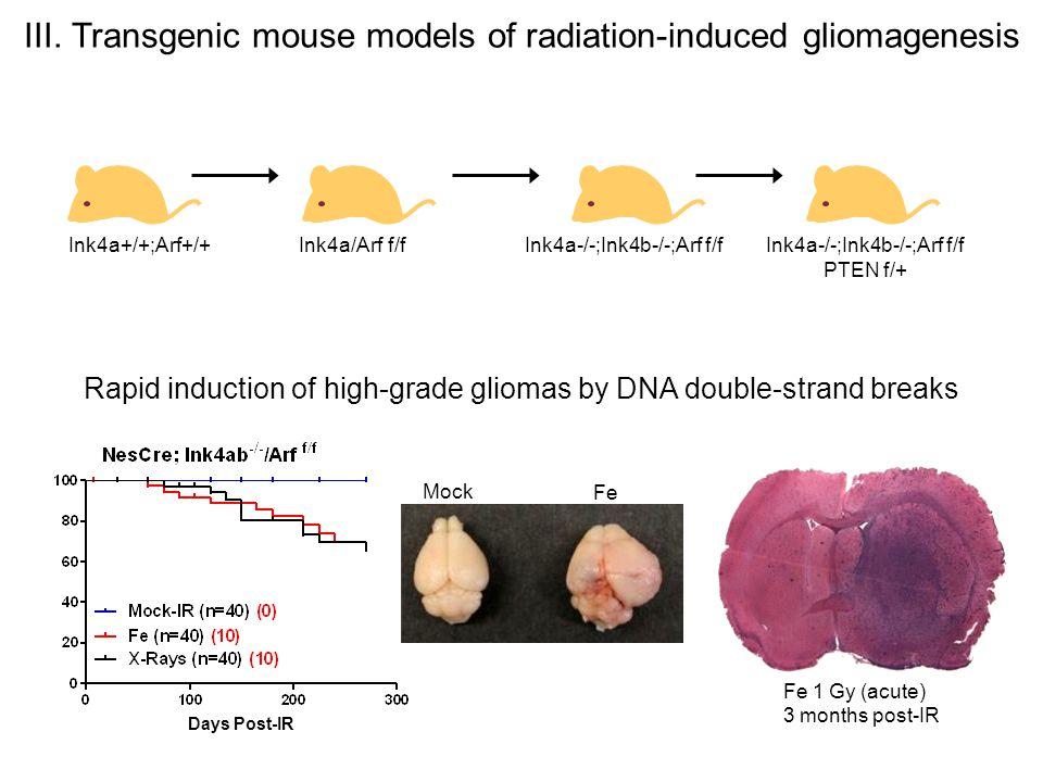 III. Transgenic mouse models of radiation-induced gliomagenesis