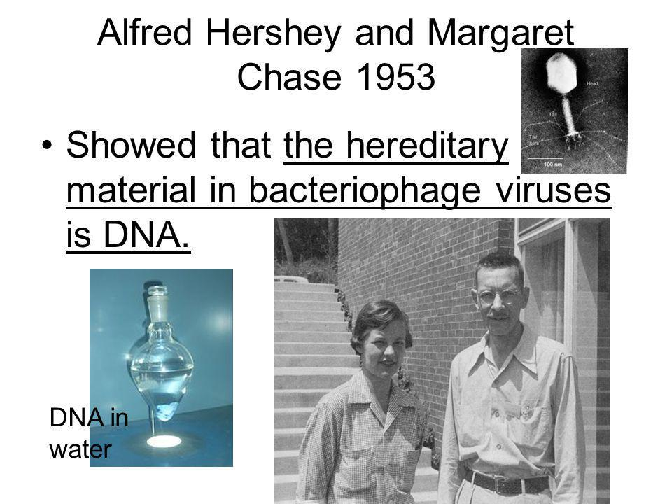 Alfred Hershey and Margaret Chase 1953