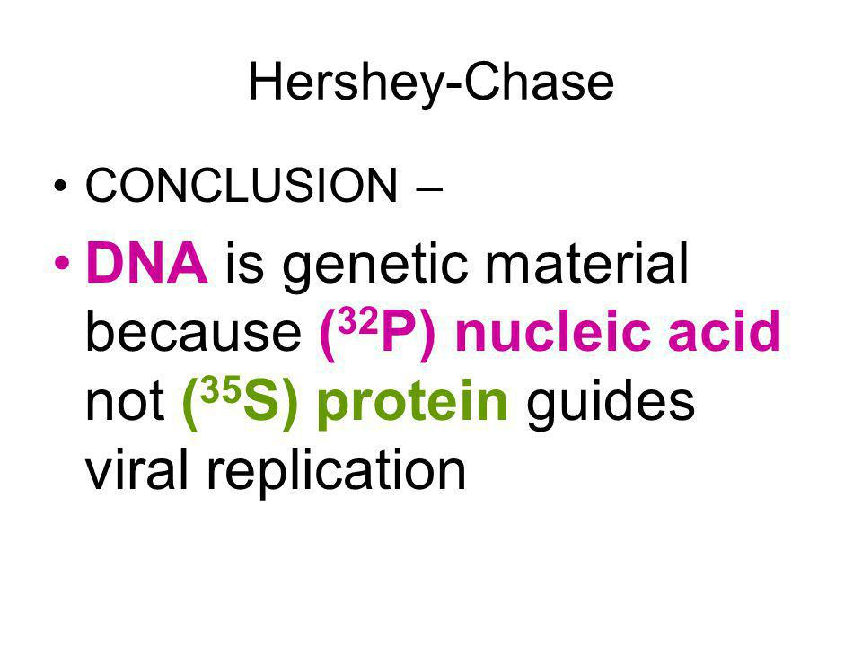 Hershey-Chase CONCLUSION – DNA is genetic material because (32P) nucleic acid not (35S) protein guides viral replication.