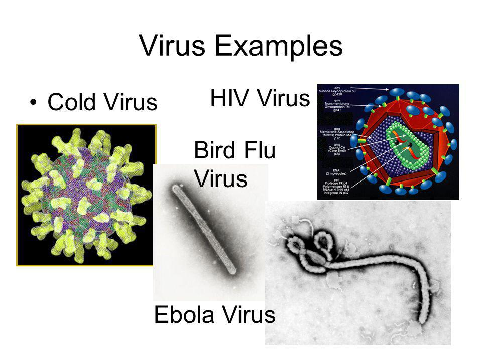 Virus Examples HIV Virus Cold Virus Bird Flu Virus Ebola Virus