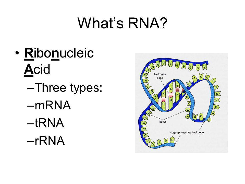 What's RNA Ribonucleic Acid Three types: mRNA tRNA rRNA