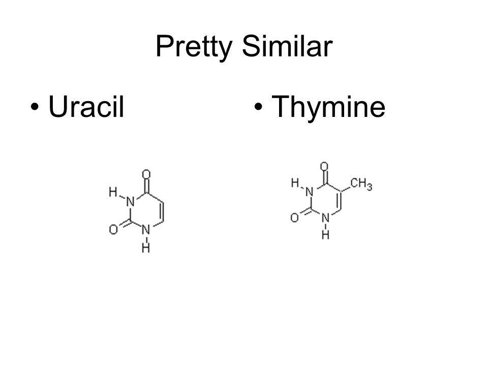 Pretty Similar Uracil Thymine