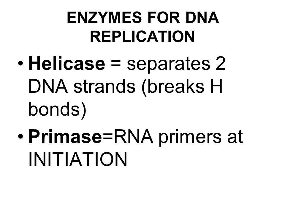 ENZYMES FOR DNA REPLICATION