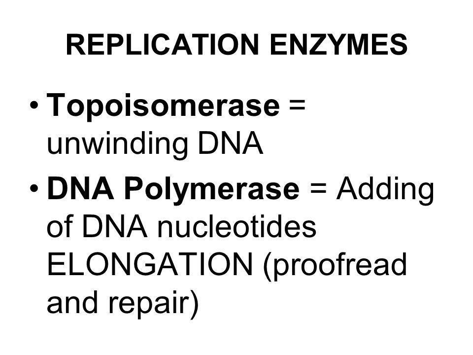 Topoisomerase = unwinding DNA