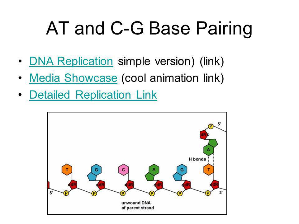 AT and C-G Base Pairing DNA Replication simple version) (link)