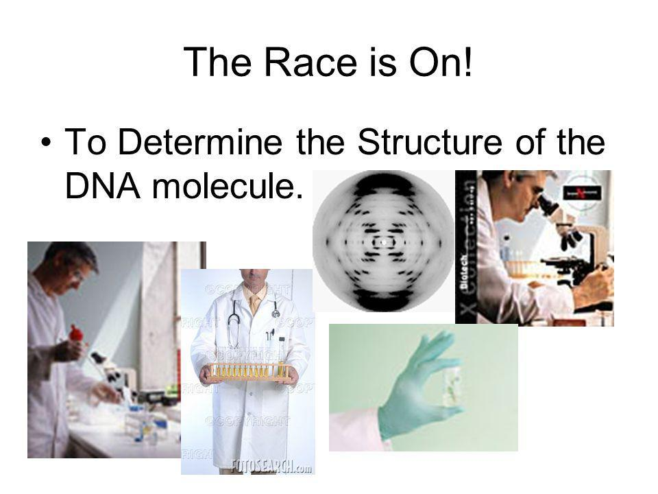 The Race is On! To Determine the Structure of the DNA molecule.