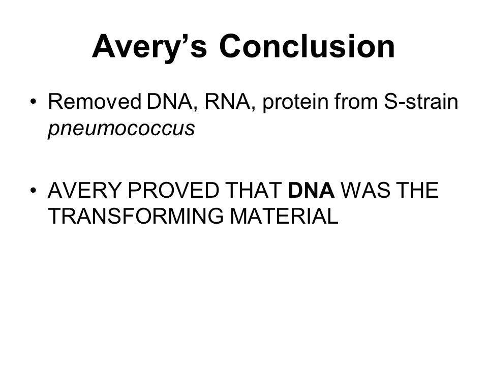 Avery's Conclusion Removed DNA, RNA, protein from S-strain pneumococcus.