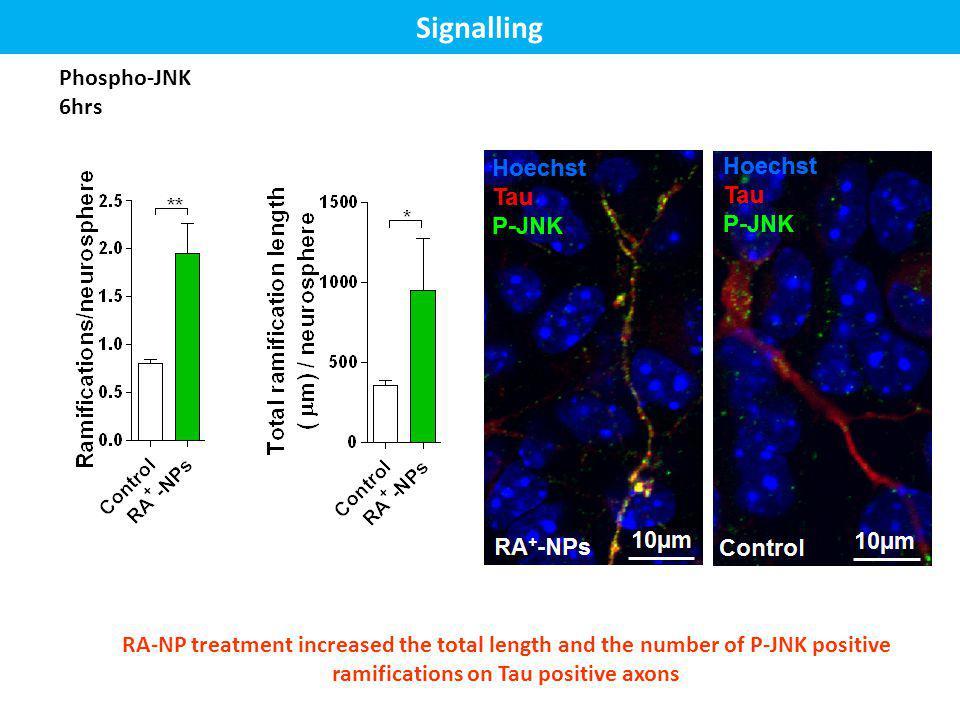 Signalling Phospho-JNK 6hrs