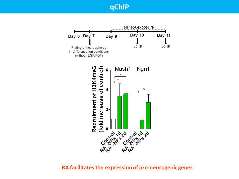 qChIP RA facilitates the expression of pro-neurogenic genes Day 0